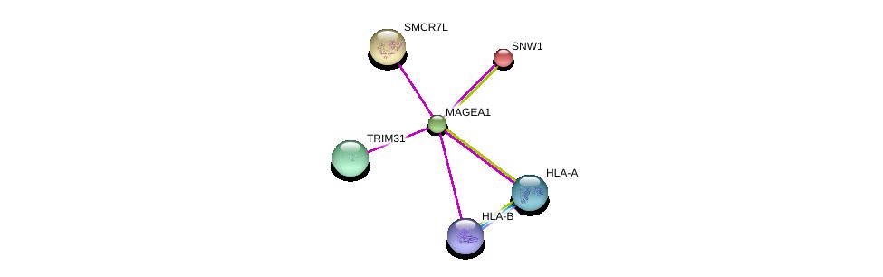 http://string-db.org/version_10/api/image/networkList?limit=0&targetmode=proteins&caller_identity=gene_cards&network_flavor=evidence&identifiers=9606.ENSP00000349085%0d%0a9606.ENSP00000366005%0d%0a9606.ENSP00000399168%0d%0a9606.ENSP00000365924%0d%0a9606.ENSP00000327124%0d%0a9606.ENSP00000261531%0d%0a