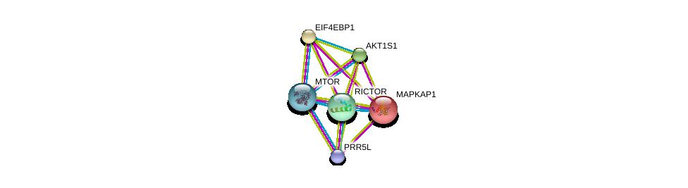 http://string-db.org/version_10/api/image/networkList?limit=0&targetmode=proteins&caller_identity=gene_cards&network_flavor=evidence&identifiers=9606.ENSP00000349959%0d%0a9606.ENSP00000341698%0d%0a9606.ENSP00000340691%0d%0a9606.ENSP00000265960%0d%0a9606.ENSP00000354558%0d%0a9606.ENSP00000368144%0d%0a