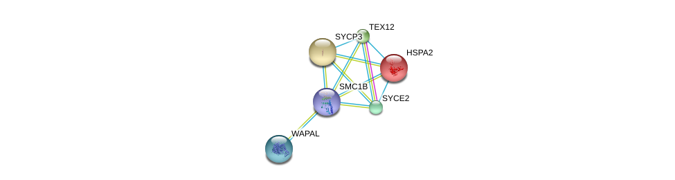 http://string-db.org/version_10/api/image/networkList?limit=0&targetmode=proteins&caller_identity=gene_cards&network_flavor=evidence&identifiers=9606.ENSP00000350036%0d%0a9606.ENSP00000247207%0d%0a9606.ENSP00000266743%0d%0a9606.ENSP00000280358%0d%0a9606.ENSP00000293695%0d%0a9606.ENSP00000298767%0d%0a