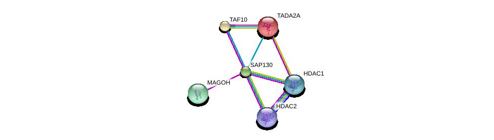 http://string-db.org/version_10/api/image/networkList?limit=0&targetmode=proteins&caller_identity=gene_cards&network_flavor=evidence&identifiers=9606.ENSP00000350333%0d%0a9606.ENSP00000360525%0d%0a9606.ENSP00000299424%0d%0a9606.ENSP00000362649%0d%0a9606.ENSP00000430432%0d%0a9606.ENSP00000225396%0d%0a