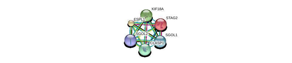http://string-db.org/version_10/api/image/networkList?limit=0&targetmode=proteins&caller_identity=gene_cards&network_flavor=evidence&identifiers=9606.ENSP00000350447%0d%0a9606.ENSP00000218089%0d%0a9606.ENSP00000257934%0d%0a9606.ENSP00000263181%0d%0a9606.ENSP00000263710%0d%0a9606.ENSP00000263753%0d%0a