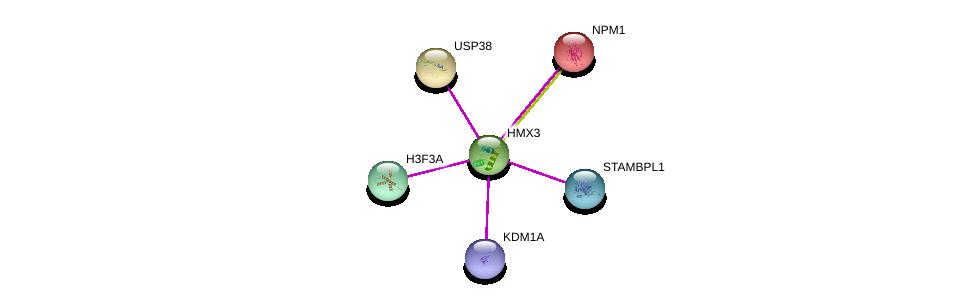 http://string-db.org/version_10/api/image/networkList?limit=0&targetmode=proteins&caller_identity=gene_cards&network_flavor=evidence&identifiers=9606.ENSP00000350549%0d%0a9606.ENSP00000360992%0d%0a9606.ENSP00000303434%0d%0a9606.ENSP00000383042%0d%0a9606.ENSP00000355778%0d%0a9606.ENSP00000296930%0d%0a