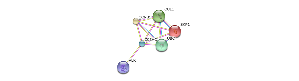 http://string-db.org/version_10/api/image/networkList?limit=0&targetmode=proteins&caller_identity=gene_cards&network_flavor=evidence&identifiers=9606.ENSP00000351052%0d%0a9606.ENSP00000231487%0d%0a9606.ENSP00000344818%0d%0a9606.ENSP00000256442%0d%0a9606.ENSP00000326804%0d%0a9606.ENSP00000373700%0d%0a