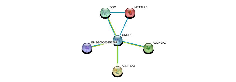 http://string-db.org/version_10/api/image/networkList?limit=0&targetmode=proteins&caller_identity=gene_cards&network_flavor=evidence&identifiers=9606.ENSP00000351682%0d%0a9606.ENSP00000450353%0d%0a9606.ENSP00000332256%0d%0a9606.ENSP00000346827%0d%0a9606.ENSP00000350616%0d%0a9606.ENSP00000262432%0d%0a