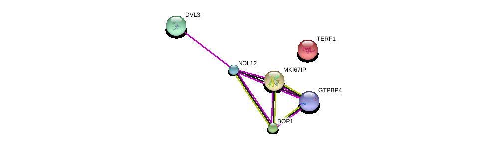 http://string-db.org/version_10/api/image/networkList?limit=0&targetmode=proteins&caller_identity=gene_cards&network_flavor=evidence&identifiers=9606.ENSP00000352021%0d%0a9606.ENSP00000285814%0d%0a9606.ENSP00000316054%0d%0a9606.ENSP00000354040%0d%0a9606.ENSP00000276603%0d%0a9606.ENSP00000304151%0d%0a