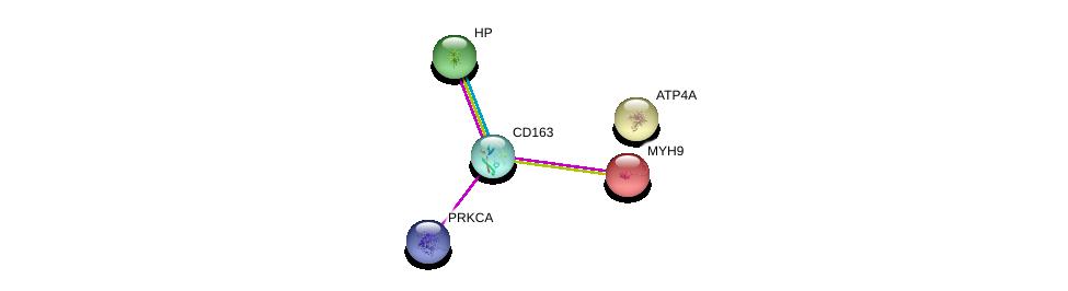 http://string-db.org/version_10/api/image/networkList?limit=0&targetmode=proteins&caller_identity=gene_cards&network_flavor=evidence&identifiers=9606.ENSP00000352071%0d%0a9606.ENSP00000408695%0d%0a9606.ENSP00000348170%0d%0a9606.ENSP00000216181%0d%0a9606.ENSP00000262623%0d%0a