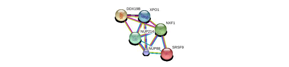 http://string-db.org/version_10/api/image/networkList?limit=0&targetmode=proteins&caller_identity=gene_cards&network_flavor=evidence&identifiers=9606.ENSP00000352400%0d%0a9606.ENSP00000458954%0d%0a9606.ENSP00000294172%0d%0a9606.ENSP00000288071%0d%0a9606.ENSP00000384863%0d%0a9606.ENSP00000229390%0d%0a