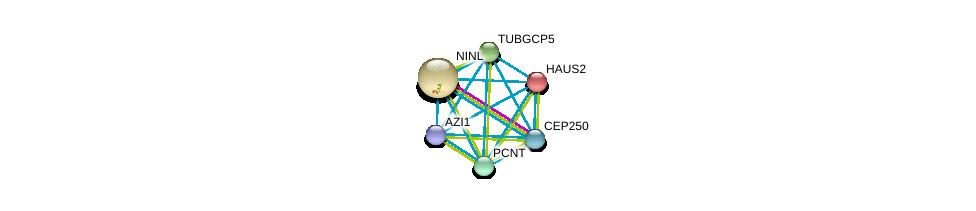 http://string-db.org/version_10/api/image/networkList?limit=0&targetmode=proteins&caller_identity=gene_cards&network_flavor=evidence&identifiers=9606.ENSP00000352572%0d%0a9606.ENSP00000393583%0d%0a9606.ENSP00000283645%0d%0a9606.ENSP00000278886%0d%0a9606.ENSP00000260372%0d%0a9606.ENSP00000380661%0d%0a