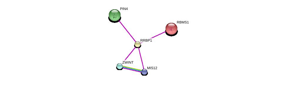 http://string-db.org/version_10/api/image/networkList?limit=0&targetmode=proteins&caller_identity=gene_cards&network_flavor=evidence&identifiers=9606.ENSP00000354045%0d%0a9606.ENSP00000370557%0d%0a9606.ENSP00000363055%0d%0a9606.ENSP00000294904%0d%0a9606.ENSP00000294904%0d%0a9606.ENSP00000362773%0d%0a