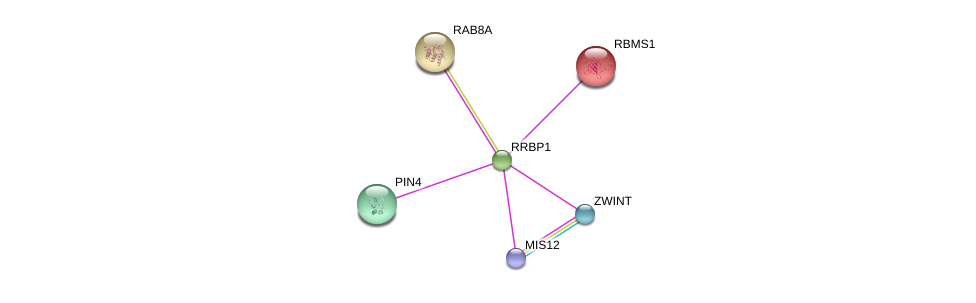 http://string-db.org/version_10/api/image/networkList?limit=0&targetmode=proteins&caller_identity=gene_cards&network_flavor=evidence&identifiers=9606.ENSP00000354045%0d%0a9606.ENSP00000370557%0d%0a9606.ENSP00000363055%0d%0a9606.ENSP00000294904%0d%0a9606.ENSP00000362773%0d%0a9606.ENSP00000300935%0d%0a