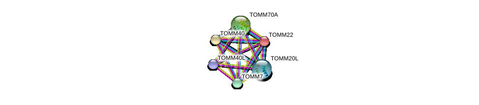 http://string-db.org/version_10/api/image/networkList?limit=0&targetmode=proteins&caller_identity=gene_cards&network_flavor=evidence&identifiers=9606.ENSP00000354204%0d%0a9606.ENSP00000216034%0d%0a9606.ENSP00000351214%0d%0a9606.ENSP00000252487%0d%0a9606.ENSP00000356966%0d%0a9606.ENSP00000284320%0d%0a