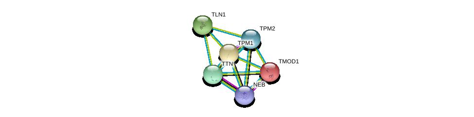 http://string-db.org/version_10/api/image/networkList?limit=0&targetmode=proteins&caller_identity=gene_cards&network_flavor=evidence&identifiers=9606.ENSP00000354219%0d%0a9606.ENSP00000267996%0d%0a9606.ENSP00000316029%0d%0a9606.ENSP00000380505%0d%0a9606.ENSP00000259365%0d%0a9606.ENSP00000343764%0d%0a