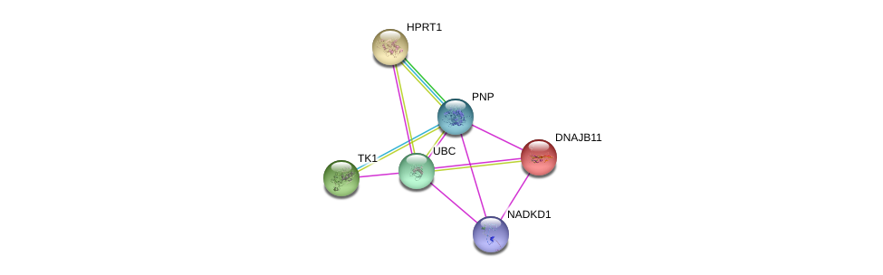http://string-db.org/version_10/api/image/networkList?limit=0&targetmode=proteins&caller_identity=gene_cards&network_flavor=evidence&identifiers=9606.ENSP00000354532%0d%0a9606.ENSP00000371362%0d%0a9606.ENSP00000344818%0d%0a9606.ENSP00000265028%0d%0a9606.ENSP00000301634%0d%0a9606.ENSP00000298556%0d%0a
