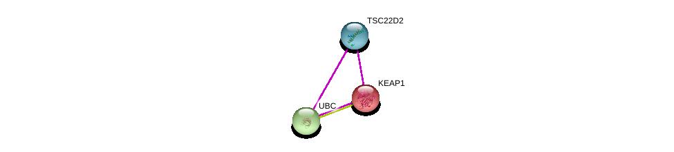 http://string-db.org/version_10/api/image/networkList?limit=0&targetmode=proteins&caller_identity=gene_cards&network_flavor=evidence&identifiers=9606.ENSP00000354543%0d%0a9606.ENSP00000171111%0d%0a9606.ENSP00000344818%0d%0a