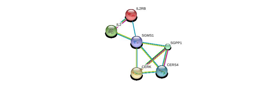 http://string-db.org/version_10/api/image/networkList?limit=0&targetmode=proteins&caller_identity=gene_cards&network_flavor=evidence&identifiers=9606.ENSP00000354829%0d%0a9606.ENSP00000216223%0d%0a9606.ENSP00000216264%0d%0a9606.ENSP00000226730%0d%0a9606.ENSP00000247225%0d%0a9606.ENSP00000251363%0d%0a