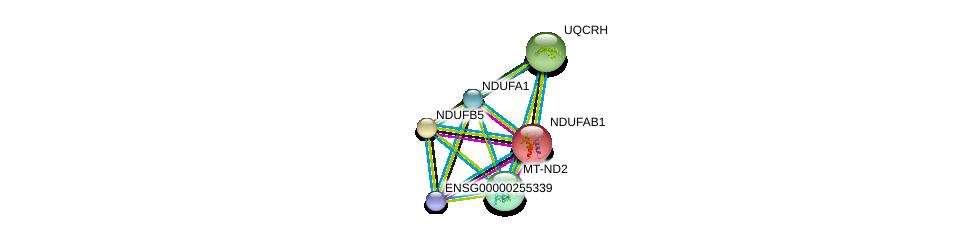 http://string-db.org/version_10/api/image/networkList?limit=0&targetmode=proteins&caller_identity=gene_cards&network_flavor=evidence&identifiers=9606.ENSP00000355046%0d%0a9606.ENSP00000007516%0d%0a9606.ENSP00000456832%0d%0a9606.ENSP00000259037%0d%0a9606.ENSP00000309565%0d%0a9606.ENSP00000360492%0d%0a