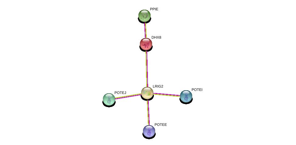 http://string-db.org/version_10/api/image/networkList?limit=0&targetmode=proteins&caller_identity=gene_cards&network_flavor=evidence&identifiers=9606.ENSP00000355396%0d%0a9606.ENSP00000262415%0d%0a9606.ENSP00000361918%0d%0a9606.ENSP00000387176%0d%0a9606.ENSP00000392718%0d%0a9606.ENSP00000439189%0d%0a