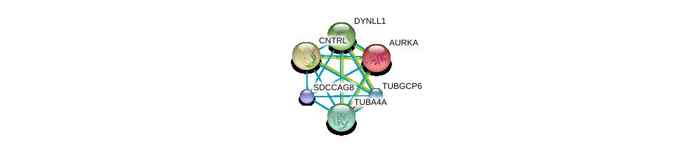 http://string-db.org/version_10/api/image/networkList?limit=0&targetmode=proteins&caller_identity=gene_cards&network_flavor=evidence&identifiers=9606.ENSP00000355499%0d%0a9606.ENSP00000216911%0d%0a9606.ENSP00000238341%0d%0a9606.ENSP00000242577%0d%0a9606.ENSP00000248437%0d%0a9606.ENSP00000248846%0d%0a
