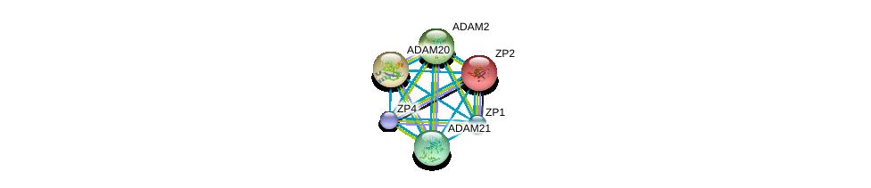 http://string-db.org/version_10/api/image/networkList?limit=0&targetmode=proteins&caller_identity=gene_cards&network_flavor=evidence&identifiers=9606.ENSP00000355529%0d%0a9606.ENSP00000265708%0d%0a9606.ENSP00000219593%0d%0a9606.ENSP00000256389%0d%0a9606.ENSP00000267499%0d%0a9606.ENSP00000278853%0d%0a