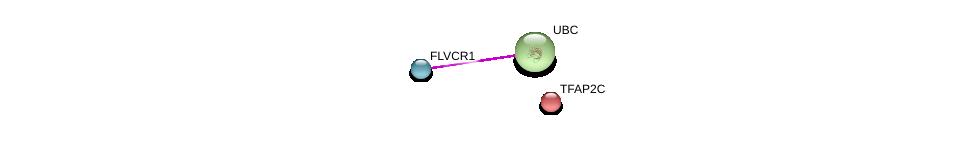 http://string-db.org/version_10/api/image/networkList?limit=0&targetmode=proteins&caller_identity=gene_cards&network_flavor=evidence&identifiers=9606.ENSP00000355938%0d%0a9606.ENSP00000344818%0d%0a9606.ENSP00000201031%0d%0a