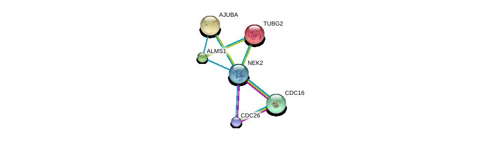http://string-db.org/version_10/api/image/networkList?limit=0&targetmode=proteins&caller_identity=gene_cards&network_flavor=evidence&identifiers=9606.ENSP00000355966%0d%0a9606.ENSP00000348554%0d%0a9606.ENSP00000363322%0d%0a9606.ENSP00000251412%0d%0a9606.ENSP00000264448%0d%0a9606.ENSP00000262713%0d%0a