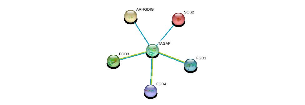 http://string-db.org/version_10/api/image/networkList?limit=0&targetmode=proteins&caller_identity=gene_cards&network_flavor=evidence&identifiers=9606.ENSP00000356033%0d%0a9606.ENSP00000336914%0d%0a9606.ENSP00000364277%0d%0a9606.ENSP00000394487%0d%0a9606.ENSP00000216373%0d%0a9606.ENSP00000219409%0d%0a