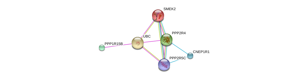 http://string-db.org/version_10/api/image/networkList?limit=0&targetmode=proteins&caller_identity=gene_cards&network_flavor=evidence&identifiers=9606.ENSP00000356156%0d%0a9606.ENSP00000344818%0d%0a9606.ENSP00000412324%0d%0a9606.ENSP00000405635%0d%0a9606.ENSP00000351885%0d%0a9606.ENSP00000339769%0d%0a