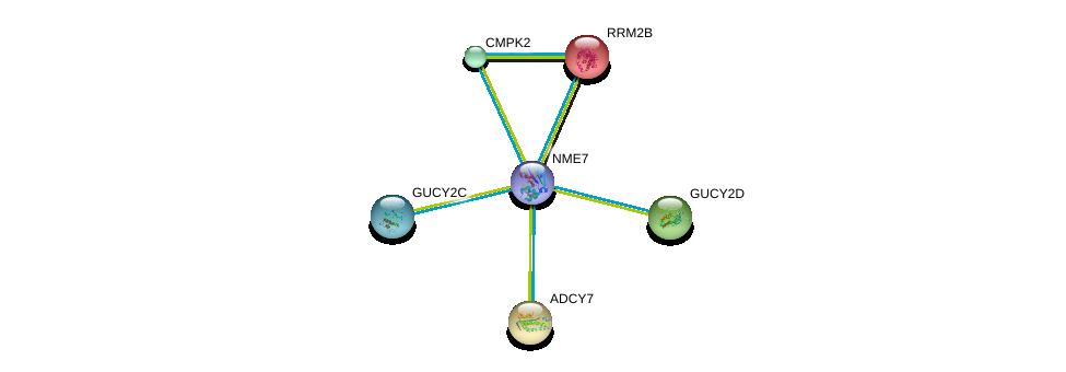 http://string-db.org/version_10/api/image/networkList?limit=0&targetmode=proteins&caller_identity=gene_cards&network_flavor=evidence&identifiers=9606.ENSP00000356785%0d%0a9606.ENSP00000251810%0d%0a9606.ENSP00000254235%0d%0a9606.ENSP00000254854%0d%0a9606.ENSP00000256722%0d%0a9606.ENSP00000261170%0d%0a