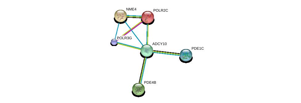 http://string-db.org/version_10/api/image/networkList?limit=0&targetmode=proteins&caller_identity=gene_cards&network_flavor=evidence&identifiers=9606.ENSP00000356825%0d%0a9606.ENSP00000332116%0d%0a9606.ENSP00000379496%0d%0a9606.ENSP00000219479%0d%0a9606.ENSP00000382058%0d%0a9606.ENSP00000219252%0d%0a