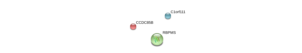 http://string-db.org/version_10/api/image/networkList?limit=0&targetmode=proteins&caller_identity=gene_cards&network_flavor=evidence&identifiers=9606.ENSP00000356912%0d%0a9606.ENSP00000340176%0d%0a9606.ENSP00000311695%0d%0a