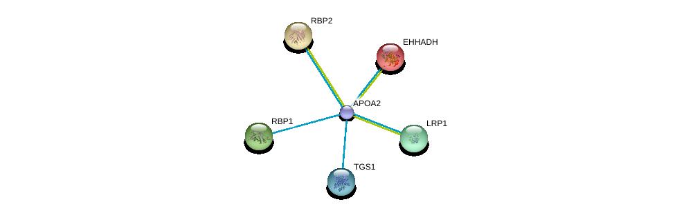 http://string-db.org/version_10/api/image/networkList?limit=0&targetmode=proteins&caller_identity=gene_cards&network_flavor=evidence&identifiers=9606.ENSP00000356969%0d%0a9606.ENSP00000231887%0d%0a9606.ENSP00000232217%0d%0a9606.ENSP00000232219%0d%0a9606.ENSP00000243077%0d%0a9606.ENSP00000260129%0d%0a
