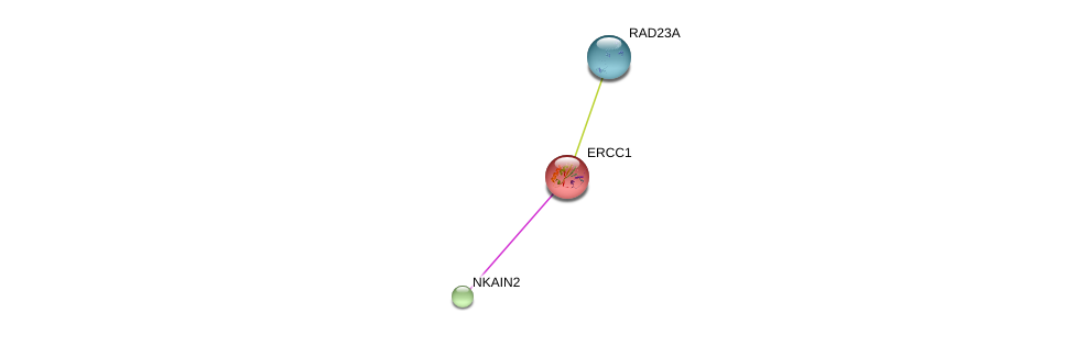 http://string-db.org/version_10/api/image/networkList?limit=0&targetmode=proteins&caller_identity=gene_cards&network_flavor=evidence&identifiers=9606.ENSP00000357402%0d%0a9606.ENSP00000013807%0d%0a9606.ENSP00000467024%0d%0a
