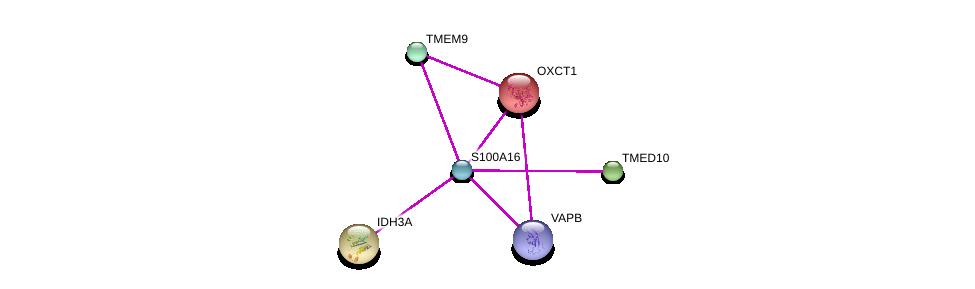 http://string-db.org/version_10/api/image/networkList?limit=0&targetmode=proteins&caller_identity=gene_cards&network_flavor=evidence&identifiers=9606.ENSP00000357692%0d%0a9606.ENSP00000356298%0d%0a9606.ENSP00000303145%0d%0a9606.ENSP00000417175%0d%0a9606.ENSP00000196371%0d%0a9606.ENSP00000299518%0d%0a