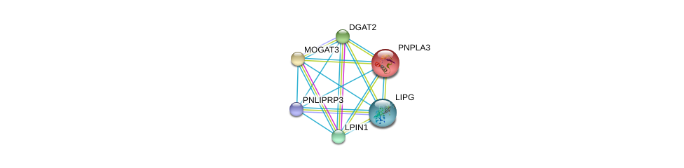 http://string-db.org/version_10/api/image/networkList?limit=0&targetmode=proteins&caller_identity=gene_cards&network_flavor=evidence&identifiers=9606.ENSP00000358232%0d%0a9606.ENSP00000216180%0d%0a9606.ENSP00000223114%0d%0a9606.ENSP00000228027%0d%0a9606.ENSP00000256720%0d%0a9606.ENSP00000261292%0d%0a