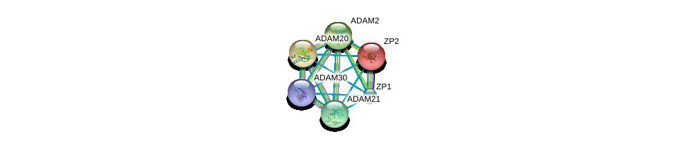 http://string-db.org/version_10/api/image/networkList?limit=0&targetmode=proteins&caller_identity=gene_cards&network_flavor=evidence&identifiers=9606.ENSP00000358407%0d%0a9606.ENSP00000219593%0d%0a9606.ENSP00000256389%0d%0a9606.ENSP00000265708%0d%0a9606.ENSP00000267499%0d%0a9606.ENSP00000278853%0d%0a