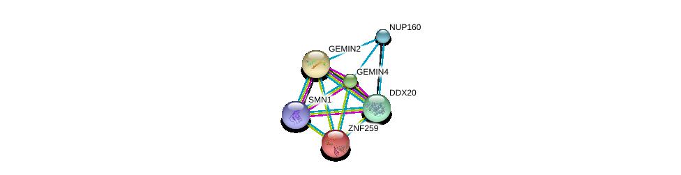 http://string-db.org/version_10/api/image/networkList?limit=0&targetmode=proteins&caller_identity=gene_cards&network_flavor=evidence&identifiers=9606.ENSP00000358716%0d%0a9606.ENSP00000370083%0d%0a9606.ENSP00000321706%0d%0a9606.ENSP00000308533%0d%0a9606.ENSP00000227322%0d%0a9606.ENSP00000367721%0d%0a