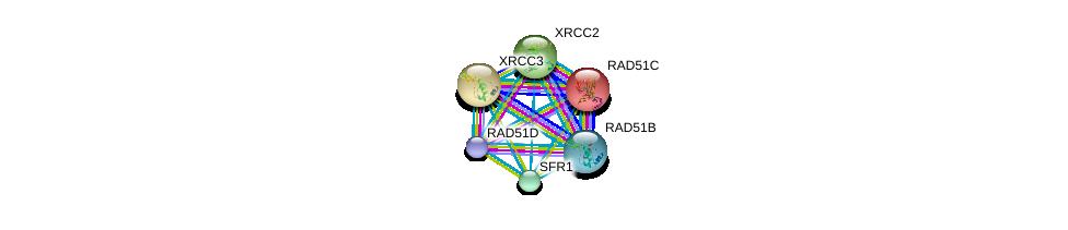 http://string-db.org/version_10/api/image/networkList?limit=0&targetmode=proteins&caller_identity=gene_cards&network_flavor=evidence&identifiers=9606.ENSP00000358742%0d%0a9606.ENSP00000466399%0d%0a9606.ENSP00000419471%0d%0a9606.ENSP00000352271%0d%0a9606.ENSP00000343392%0d%0a9606.ENSP00000336701%0d%0a
