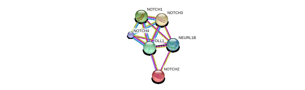 http://string-db.org/version_10/api/image/networkList?limit=0&targetmode=proteins&caller_identity=gene_cards&network_flavor=evidence&identifiers=9606.ENSP00000358815%0d%0a9606.ENSP00000355718%0d%0a9606.ENSP00000256646%0d%0a9606.ENSP00000263388%0d%0a9606.ENSP00000277541%0d%0a9606.ENSP00000364163%0d%0a