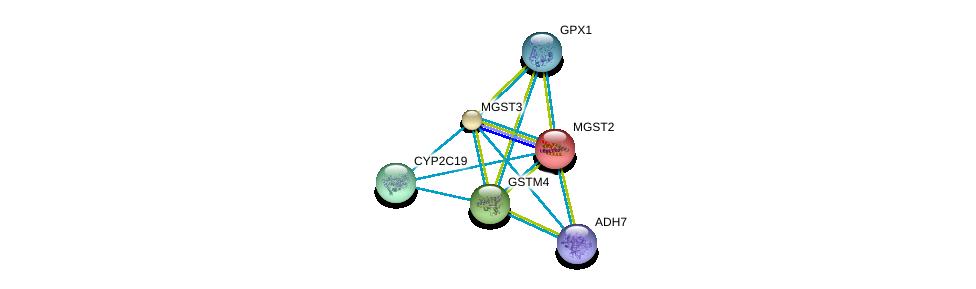 http://string-db.org/version_10/api/image/networkList?limit=0&targetmode=proteins&caller_identity=gene_cards&network_flavor=evidence&identifiers=9606.ENSP00000358851%0d%0a9606.ENSP00000356859%0d%0a9606.ENSP00000265498%0d%0a9606.ENSP00000360372%0d%0a9606.ENSP00000420269%0d%0a9606.ENSP00000407375%0d%0a