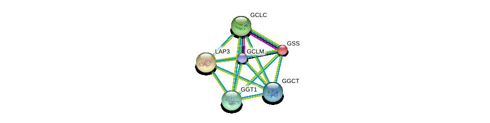 http://string-db.org/version_10/api/image/networkList?limit=0&targetmode=proteins&caller_identity=gene_cards&network_flavor=evidence&identifiers=9606.ENSP00000359258%0d%0a9606.ENSP00000229416%0d%0a9606.ENSP00000216951%0d%0a9606.ENSP00000226299%0d%0a9606.ENSP00000248923%0d%0a9606.ENSP00000275428%0d%0a