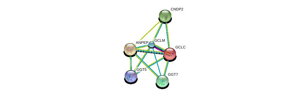 http://string-db.org/version_10/api/image/networkList?limit=0&targetmode=proteins&caller_identity=gene_cards&network_flavor=evidence&identifiers=9606.ENSP00000359258%0d%0a9606.ENSP00000229416%0d%0a9606.ENSP00000300060%0d%0a9606.ENSP00000381340%0d%0a9606.ENSP00000338964%0d%0a9606.ENSP00000325548%0d%0a
