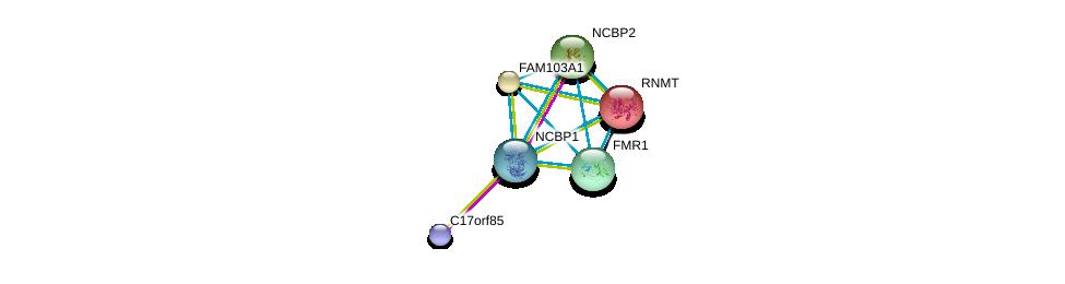 http://string-db.org/version_10/api/image/networkList?limit=0&targetmode=proteins&caller_identity=gene_cards&network_flavor=evidence&identifiers=9606.ENSP00000359506%0d%0a9606.ENSP00000373657%0d%0a9606.ENSP00000326806%0d%0a9606.ENSP00000262173%0d%0a9606.ENSP00000364289%0d%0a9606.ENSP00000307181%0d%0a