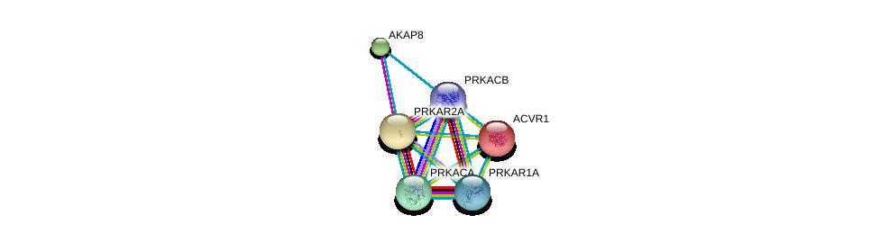 http://string-db.org/version_10/api/image/networkList?limit=0&targetmode=proteins&caller_identity=gene_cards&network_flavor=evidence&identifiers=9606.ENSP00000359719%0d%0a9606.ENSP00000309591%0d%0a9606.ENSP00000265563%0d%0a9606.ENSP00000351410%0d%0a9606.ENSP00000263640%0d%0a9606.ENSP00000269701%0d%0a