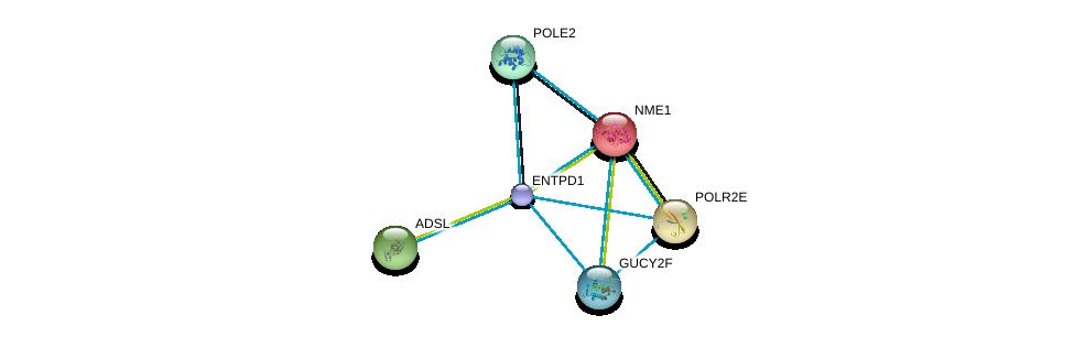http://string-db.org/version_10/api/image/networkList?limit=0&targetmode=proteins&caller_identity=gene_cards&network_flavor=evidence&identifiers=9606.ENSP00000360250%0d%0a9606.ENSP00000013034%0d%0a9606.ENSP00000215587%0d%0a9606.ENSP00000216194%0d%0a9606.ENSP00000216367%0d%0a9606.ENSP00000218006%0d%0a