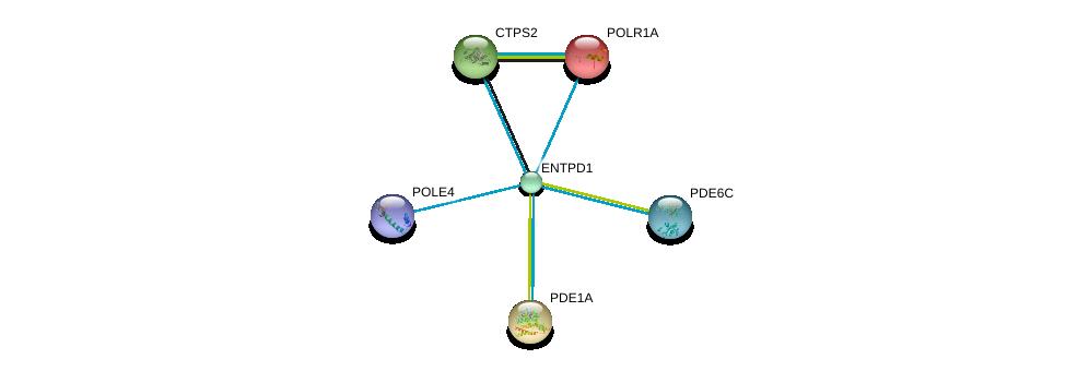 http://string-db.org/version_10/api/image/networkList?limit=0&targetmode=proteins&caller_identity=gene_cards&network_flavor=evidence&identifiers=9606.ENSP00000360250%0d%0a9606.ENSP00000352222%0d%0a9606.ENSP00000331574%0d%0a9606.ENSP00000420176%0d%0a9606.ENSP00000360502%0d%0a9606.ENSP00000263857%0d%0a