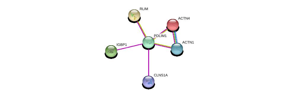 http://string-db.org/version_10/api/image/networkList?limit=0&targetmode=proteins&caller_identity=gene_cards&network_flavor=evidence&identifiers=9606.ENSP00000360305%0d%0a9606.ENSP00000377941%0d%0a9606.ENSP00000252699%0d%0a9606.ENSP00000253571%0d%0a9606.ENSP00000433919%0d%0a9606.ENSP00000348784%0d%0a