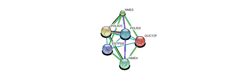 http://string-db.org/version_10/api/image/networkList?limit=0&targetmode=proteins&caller_identity=gene_cards&network_flavor=evidence&identifiers=9606.ENSP00000360561%0d%0a9606.ENSP00000218006%0d%0a9606.ENSP00000219252%0d%0a9606.ENSP00000219302%0d%0a9606.ENSP00000219479%0d%0a9606.ENSP00000221859%0d%0a