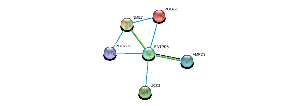 http://string-db.org/version_10/api/image/networkList?limit=0&targetmode=proteins&caller_identity=gene_cards&network_flavor=evidence&identifiers=9606.ENSP00000360561%0d%0a9606.ENSP00000418603%0d%0a9606.ENSP00000356785%0d%0a9606.ENSP00000292614%0d%0a9606.ENSP00000379802%0d%0a9606.ENSP00000356853%0d%0a