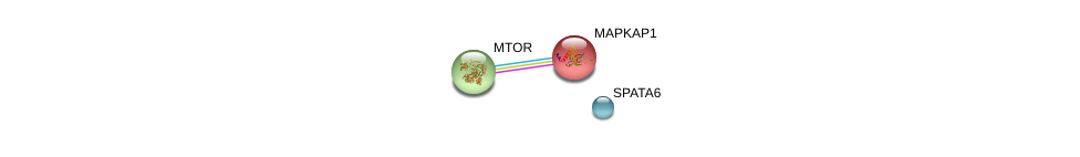 http://string-db.org/version_10/api/image/networkList?limit=0&targetmode=proteins&caller_identity=gene_cards&network_flavor=evidence&identifiers=9606.ENSP00000360913%0d%0a9606.ENSP00000265960%0d%0a9606.ENSP00000354558%0d%0a