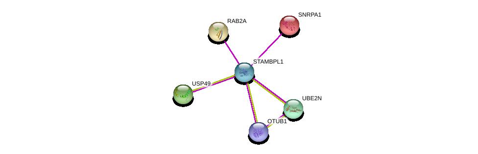 http://string-db.org/version_10/api/image/networkList?limit=0&targetmode=proteins&caller_identity=gene_cards&network_flavor=evidence&identifiers=9606.ENSP00000360992%0d%0a9606.ENSP00000316176%0d%0a9606.ENSP00000402551%0d%0a9606.ENSP00000262646%0d%0a9606.ENSP00000254193%0d%0a9606.ENSP00000297229%0d%0a
